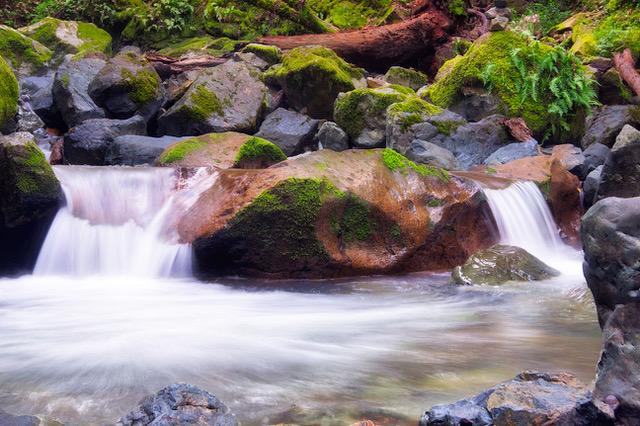beautiful creek in Sonoma
